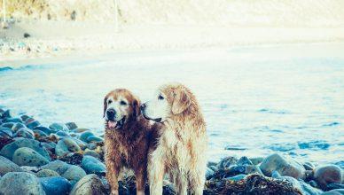 lake-animals-dogs